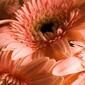 MOTHERS DAY WEBSET- 'FLOWERS FOR MOM'